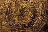 Closeup photo of birds nest made of straws — Stock Photo