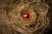 Small red heart lying in birds nest — Stock Photo