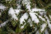 Photo of fir tree branch covered by snow — Stock Photo