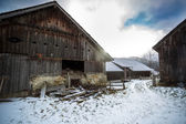 Traditional wooden farm in Austrian alps — Stock Photo
