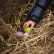 Closeup shot of girls hand taking Easter egg from the nest — Stock Photo #66163012