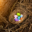 Closeup shot of colorful easter eggs lying in nest at forest — Stock Photo #66163084