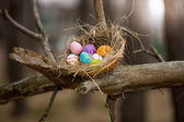 Birds nest with Easter eggs on high branch at forest — Stock Photo