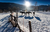 Three horses at outdoor paddock in snowy day — Stock Photo