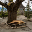 Wooden sleighs standing next to big tree — Stock fotografie #66682177