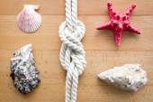 Closeup of seashells, starfish and knot from sailing travels — Stock Photo