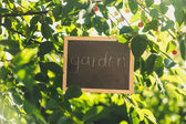 """Blackboard hanging on tree at garden with text """"Garden"""" — Stock Photo"""