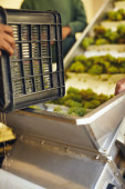 Working loading grapes on a conveyor — Stock Photo