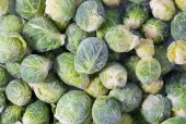 Bunch of frozen sprouts — Stock Photo