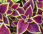 Prydnadsväxter — Stockfoto