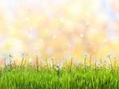 Spring meadow — Stock Photo