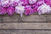Peonies flower — Stock Photo