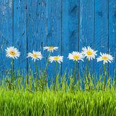 Spring grass — Stock Photo