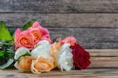 Lovely rose flowers — Stock Photo