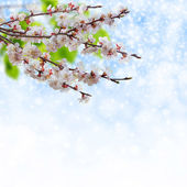 Spring branches — Stock Photo