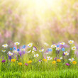 Floral meadow — Stock Photo #61868129