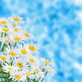 Spring background — Stock Photo
