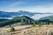 Foresta in montagna — Foto Stock
