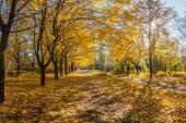 Beautiful autumn parkland — Stock Photo