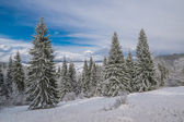 Majestic winter forest — Stock Photo