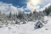 Fairy winter forest — Stock Photo