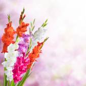Beautiful Floral Nature Background — Stock Photo