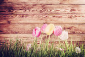 Vintage Background with Tulip — Stock Photo
