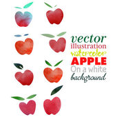 Akvarel jablko — Stockvektor
