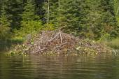Beaver Lodge on a Wilderness River — Stock Photo