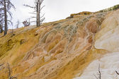 Travertine and petrified trees in Yellowstone — Stock Photo