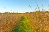 Quiet Path in to the Prairie — Stock Photo