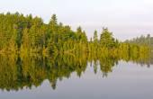 утром размышления в северном лесу — Стоковое фото