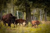 Animals in the reserve, Russia — Stock Photo