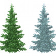Christmas green and blue spruce fir trees — Stock Photo #51842749
