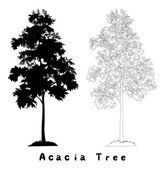 Acacia tree silhouette, contours and inscriptions — Foto Stock