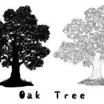 Oak Tree Silhouette, Contours and Inscriptions — Stock Photo #72241007