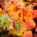 Fall season nature background. Bright colorful autumn leaves — Stock Photo #54796055