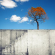 White concrete wall with stairway and small autumnal tree above — Stock Photo #56113679