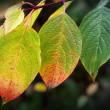 Autumn nature background. Bright colorful leaves, macro photo wi — Stockfoto #56113689
