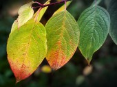 Autumn nature background. Bright colorful leaves, macro photo wi — Stock Photo