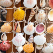 Colorful shells on net, marine decoration — Stock Photo #56663585