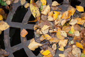 Drainage sewer manhole in the autumnal park — ストック写真