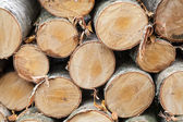 Pile of firewood, photo of birch chocks — Stock Photo