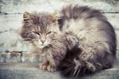 Gray homeless longhair cat sitting on bench — Stock Photo