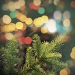Spruce tree branch closeup photo with colorful lights bokeh — Stock Photo #60059081