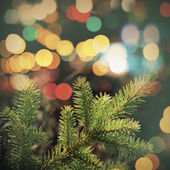 Spruce tree branch closeup photo with colorful lights bokeh — Stock Photo