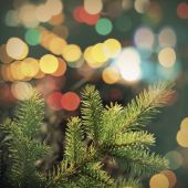 Spruce tree branch closeup photo with colorful lights bokeh — Stok fotoğraf