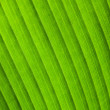 Natural macro photo background with green leaf texture — Stock Photo #62982603