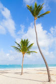 Two palm trees on empty beach with white sand — Stock Photo