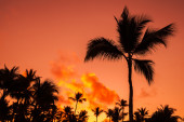 Coconut palm trees silhouettes over bright red sky — Stock Photo